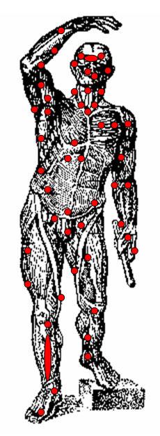 болевых точек на теле